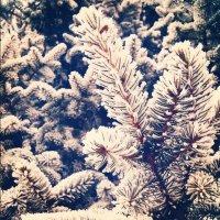 Hello, winter! :: Василиса Керн