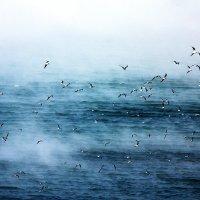 Море.Мороз.Холод.Птицы.Чайки.Зима.Брр... :: Ирина Серова
