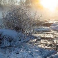 Морозное утро :: Илья Костин