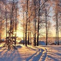 Закат за рощей :: Валерий Талашов