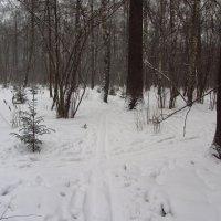 IMG_9665 - Снова не цветная зима :: Андрей Лукьянов