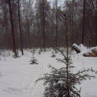 IMG_9661 - Снова не цветная зима :: Андрей Лукьянов