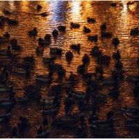 Утки в золоте :: Ренат Менаждинов
