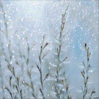 Зимние узоры :: Swetlana V