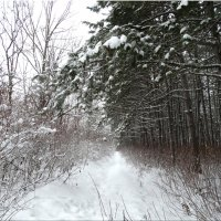 Зимняя прогулка... :: Тамара (st.tamara)