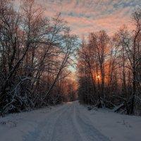 Прогулка по лесу. :: Дмитрий ...