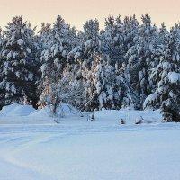 Лесной заслон. :: Galina S*