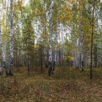 Осенний лесной пейзаж :: Александр