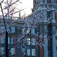 Главное здание Екатеринбурга :: Светлана Игнатьева