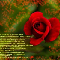 всемирный день СПАСИБО!!! :: Светлана Шакирзянова