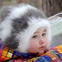 котенок :: Zima Zima