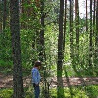 В лесу :: Наталья
