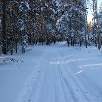 Дорога в лесу :: Владимир Чуриков