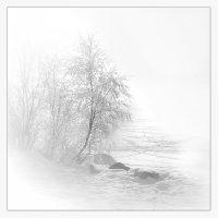 Белая зима :: Лариса Шамбраева