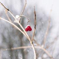 в лесу :: Виталий Исаев