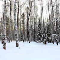уральский лес :: Ирина Мамчур (Малыгина)