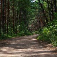 Дорога в лесу :: Анна Никитина