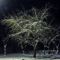 А снег всё идет... :: Евгений Астахов