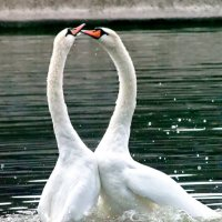 А если это любовь... :: Наталья