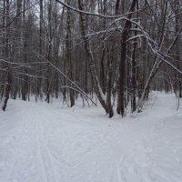 IMG_9933 - Просто зима в парке :: Андрей Лукьянов
