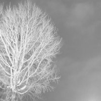 К Холодному Небу!! :: Алексей Лукаев