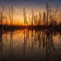 Застывший закат над болотом :: Владимир Чуприков