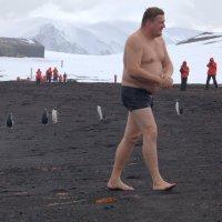В Антарктиде тоже бывает купальный сезон :: Геннадий Мельников