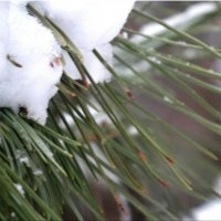 Зима крупным планом... :: Тамара (st.tamara)