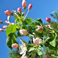 Нежность весны :: Лидия (naum.lidiya)