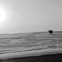 Одинокая сосна :: Сергей Бажов
