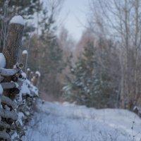 Зима :: Андрей Химич