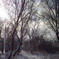 дорога в лесу :: Валентина Лексикова