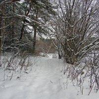 После снегопада :: Сергей Фомичев