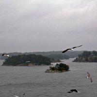По выходе из Стокгольма-5 :: Александр Рябчиков