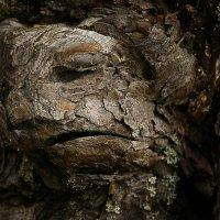 Лесные чудеса 3 :: Валерий Талашов