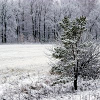 Снежок :: Алексей Дмитриев