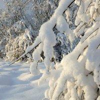 Заметает зима, заметает........ :: Павлова Татьяна Павлова