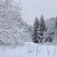 В снежном,белом плену :: Павлова Татьяна Павлова