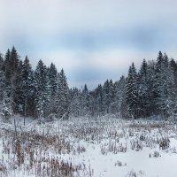 Зимний лес :: Photo-tur.ru