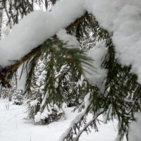 Зимний лес :: Виктор Жигалов