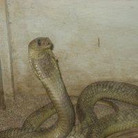 моисей змей :: Михаил Филатов