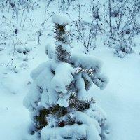 Зима :: Александр Резуненко