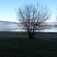 Утро туманное. :: Olga Grushko
