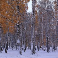 Октябрьский снег :: Татьяна Ломтева