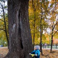 Когда деревья были большими... :: Алексей Волков