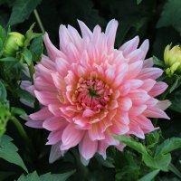 Цветок :: Александра