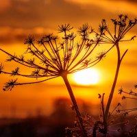 Закат в канун Старого Нового года. 02.    13.01.2015. :: Анатолий Клепешнёв