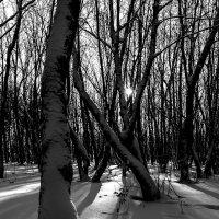 Зимние зарисовки 4 :: Sergey Kuznetsov