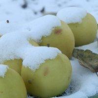 Яблоки на снегу. :: Королева Надежда