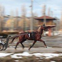 Победитель :: Виктор Марченко